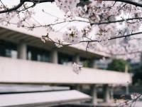 【東京国立近代美術館】美術館の春まつり