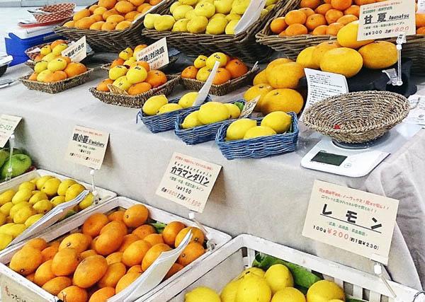 ページトップの写真は、ブラッドオレンジの「モロ」。希少な国産で,抗酸化作用もあり、女性に人気!