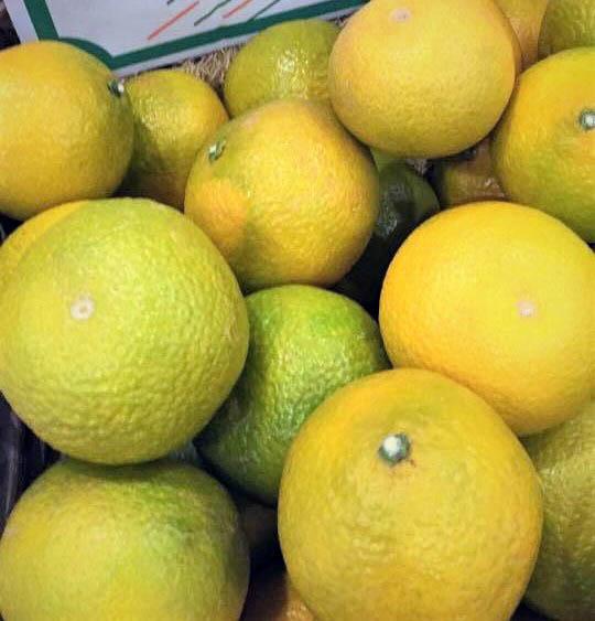 「スイートスプリング」は、春を呼ぶ柑橘